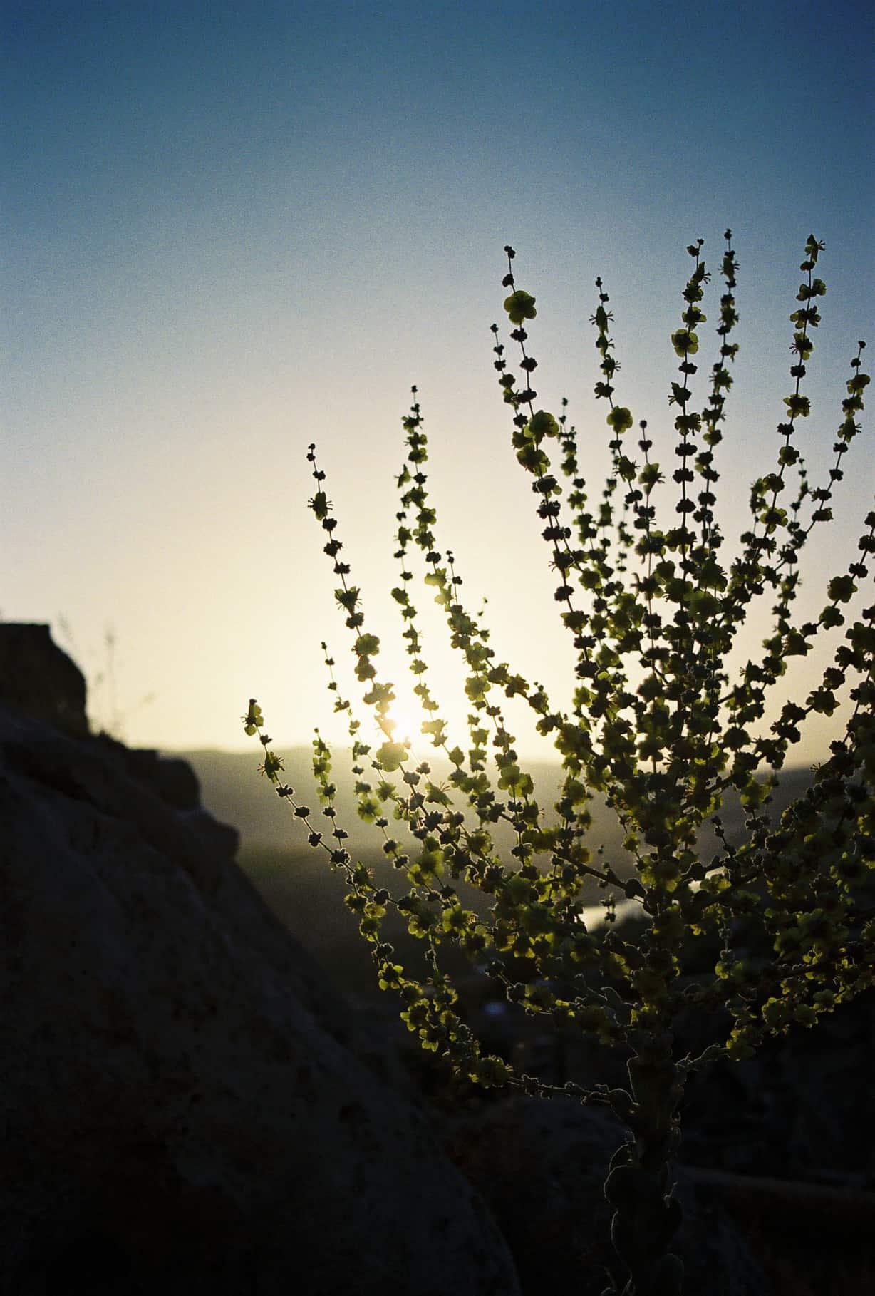 Strange Plants at Sunrise