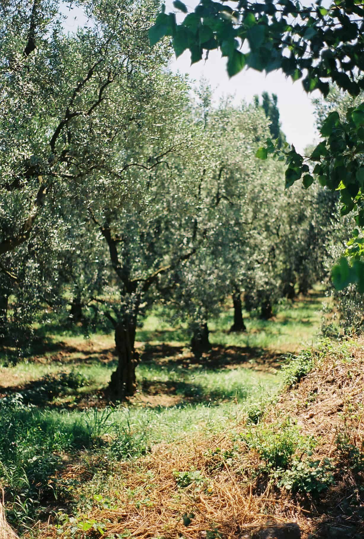 Orchards in Anatolia