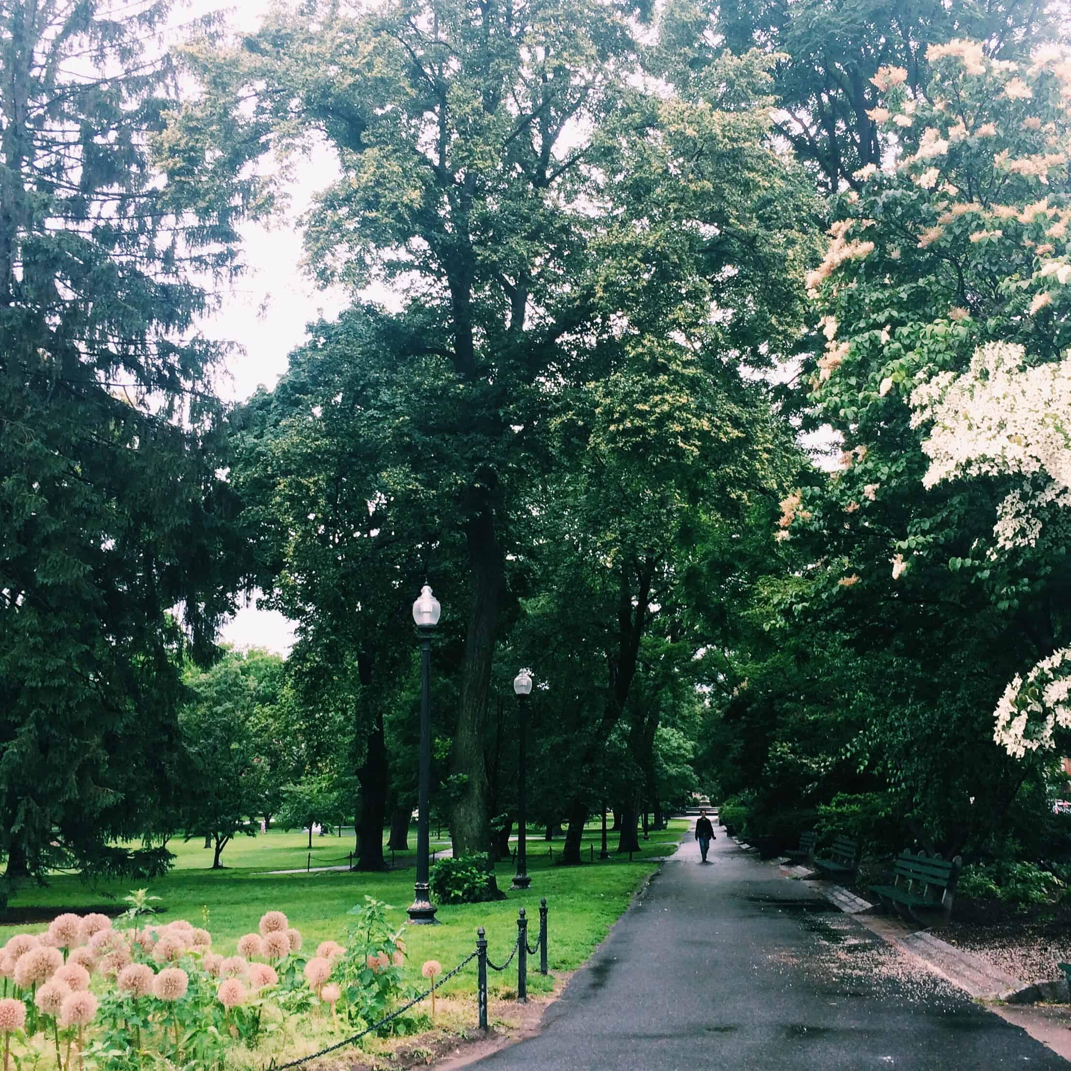 boston public garden june in review