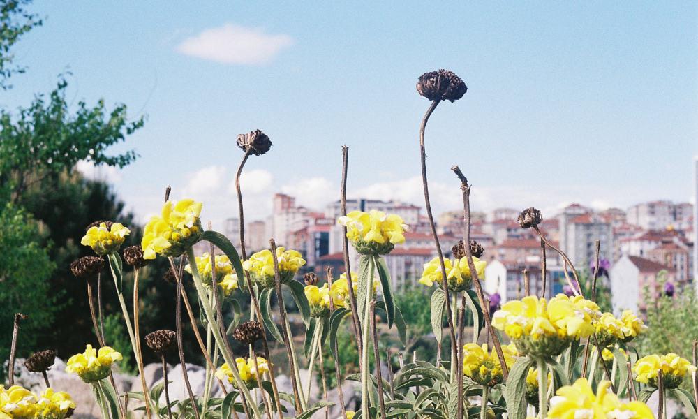 Istanbul's Hidden Botanical Garden