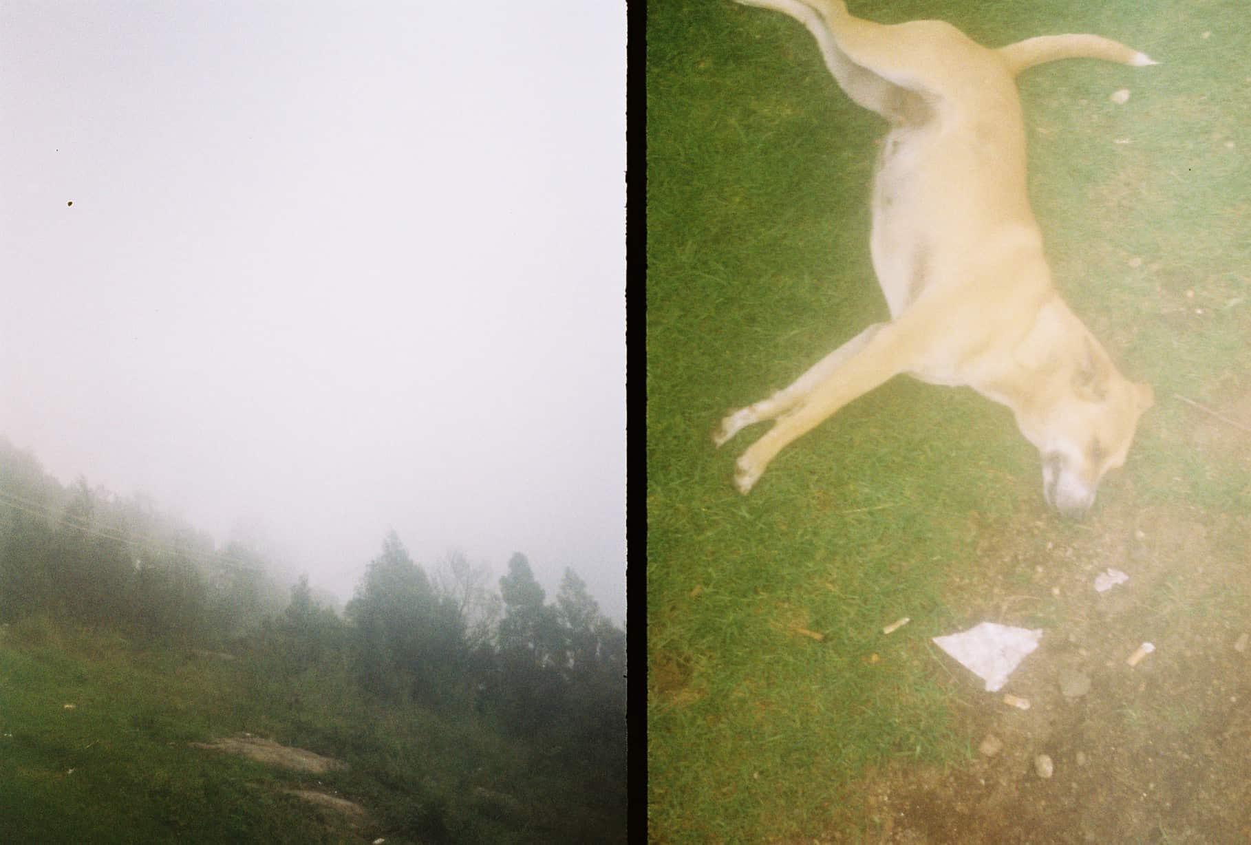 kodaikanal fog